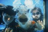 Let it Flow, Let Yourself Go – How the Beastie Boys help meswim.